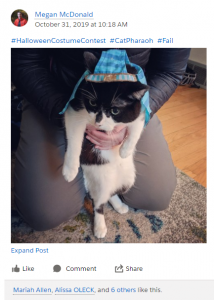 """screenshot of """"Pets Pets Pets"""" Chatter group in Salesforce"""